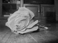 My pretty rose.